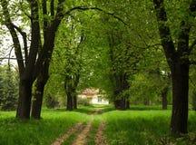 εγκαταλειμμένος νεφελώδης κήπος Στοκ Εικόνες