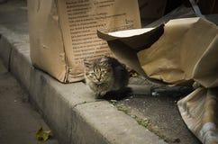 Εγκαταλειμμένο γατάκι στον καιρό φθινοπώρου στοκ φωτογραφίες με δικαίωμα ελεύθερης χρήσης