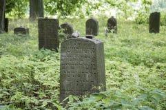 Εγκαταλειμμένο εβραϊκό νεκροταφείο στα ξύλα κοντά σε Havlickuv Brod, Τσεχία, τάφοι που περιβάλλονται με τα ζιζάνια Στοκ Εικόνες