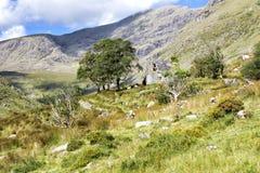Εγκαταλειμμένο εξοχικό σπίτι Rrual στα βουνά ιρλανδικών αγελάδων Στοκ εικόνες με δικαίωμα ελεύθερης χρήσης