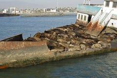 εγκαταλειμμένο σκάφος θάλασσας lions07 Στοκ φωτογραφίες με δικαίωμα ελεύθερης χρήσης