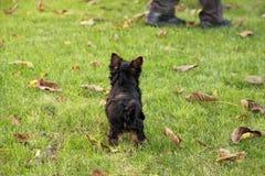 εγκαταλειμμένο σκυλί Στοκ Φωτογραφίες