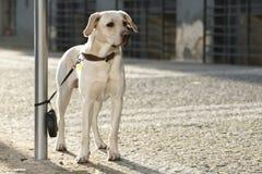 εγκαταλειμμένο σκυλί Στοκ εικόνα με δικαίωμα ελεύθερης χρήσης