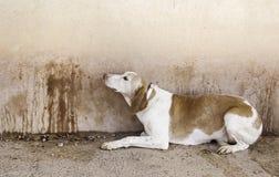 εγκαταλειμμένο σκυλί στοκ εικόνα