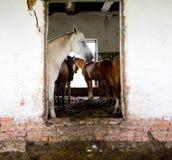 εγκαταλειμμένο σπίτι αλό&g Στοκ Φωτογραφία