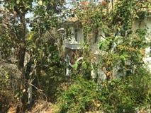 Εγκαταλειμμένο σπίτι πολυτέλειας που καλύπτεται με τις εγκαταστάσεις και το αναρριχητικό φυτό Στοκ Εικόνες