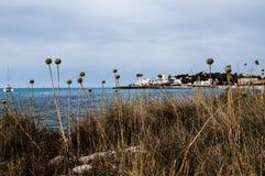 Εγκαταστάσεις, δέντρα και λουλούδια Στοκ φωτογραφίες με δικαίωμα ελεύθερης χρήσης