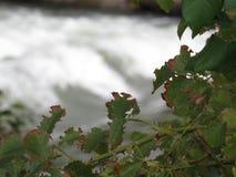 Εγκαταστάσεις δίπλα στο βρυχηθμό του ποταμού Στοκ εικόνες με δικαίωμα ελεύθερης χρήσης