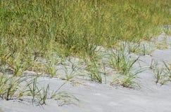 Εγκαταστάσεις αμμόλοφων σε μια παραλία στη Φλώριδα Στοκ φωτογραφίες με δικαίωμα ελεύθερης χρήσης