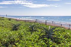 Εγκαταστάσεις βλάστησης και Aloe ενάντια στον ωκεάνιο μπλε ουρανό παραλιών Στοκ Εικόνες