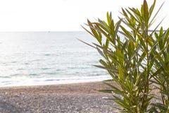Εγκαταστάσεις ενάντια στη Μαύρη Θάλασσα στοκ φωτογραφίες