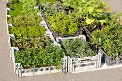 Εγκαταστάσεις κήπων λιανικές, αγορά αγροτών στοκ φωτογραφία με δικαίωμα ελεύθερης χρήσης