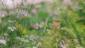 Εγκαταστάσεις κήπων μικρόκοσμου απόθεμα βίντεο