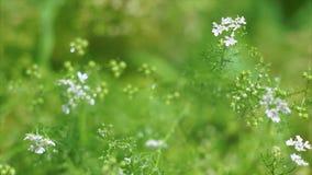 Εγκαταστάσεις κήπων μικρόκοσμου φιλμ μικρού μήκους