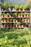 Εγκαταστάσεις κήπων στο αυξανόμενο κέντρο λουλουδιών Βελτίωση εγχώριου χόμπι στοκ εικόνες