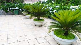 Εγκαταστάσεις κήπων Στοκ εικόνα με δικαίωμα ελεύθερης χρήσης