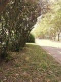 Εγκαταστάσεις και δέντρα δίπλα στην οδό την άνοιξη στοκ εικόνες