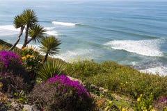 Εγκαταστάσεις και δέντρα σε μια βουνοπλαγιά που αγνοεί Surfers στον ωκεανό στοκ φωτογραφία με δικαίωμα ελεύθερης χρήσης