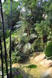 Εγκαταστάσεις και νερό τροπικών δασών Στοκ Φωτογραφία