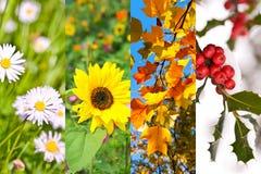 Εγκαταστάσεις και λουλούδια την άνοιξη, καλοκαίρι, φθινόπωρο, χειμώνας, κολάζ φωτογραφιών, έννοια τεσσάρων εποχών Στοκ Εικόνες