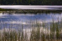 Εγκαταστάσεις λιμνών στην ακτή της λίμνης αραχνών στοκ εικόνες
