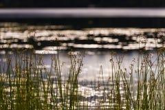 Εγκαταστάσεις λιμνών στην ακτή της λίμνης αραχνών στοκ εικόνα