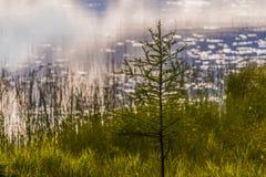 Εγκαταστάσεις λιμνών στην ακτή της λίμνης αραχνών στοκ φωτογραφίες με δικαίωμα ελεύθερης χρήσης