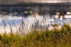 Εγκαταστάσεις λιμνών στην ακτή της λίμνης αραχνών στοκ εικόνα με δικαίωμα ελεύθερης χρήσης