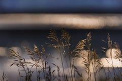Εγκαταστάσεις λιμνών στην ακτή της λίμνης αραχνών στοκ φωτογραφία με δικαίωμα ελεύθερης χρήσης