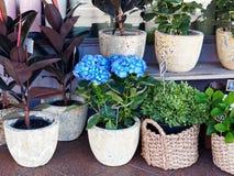 Εγκαταστάσεις λουλουδιών στα δοχεία και τα καλάθια καλάμων Στοκ Εικόνα