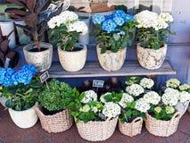 Εγκαταστάσεις λουλουδιών στα δοχεία και τα καλάθια καλάμων Στοκ Εικόνες