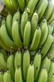 Εγκαταστάσεις μπανανών Στοκ Εικόνες