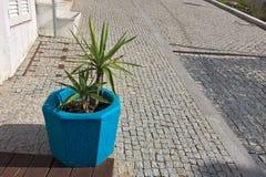 Εγκαταστάσεις μπλε flowerpot, στοιχείο χρώματος, λουλούδι σε ένα δοχείο στην οδό στοκ εικόνες με δικαίωμα ελεύθερης χρήσης