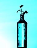 Εγκαταστάσεις μπουκαλιών με το ανοικτό μπλε υπόβαθρο Στοκ φωτογραφία με δικαίωμα ελεύθερης χρήσης