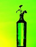 Εγκαταστάσεις μπουκαλιών Στοκ Εικόνα