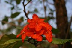 Εγκαταστάσεις, νέο λουλούδι στοκ φωτογραφίες με δικαίωμα ελεύθερης χρήσης