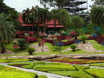 Εγκαταστάσεις πάρκων, πάρκο της Ταϊλάνδης, Στοκ φωτογραφία με δικαίωμα ελεύθερης χρήσης