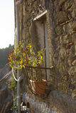 Εγκαταστάσεις πιπεριών τσίλι (καψικό SSP) σε ένα μικρό μπαλκόνι στοκ φωτογραφία