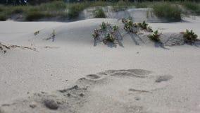 Εγκαταστάσεις που αυξάνονται στην άμμο στα πλαίσια των σύννεφων στοκ εικόνα με δικαίωμα ελεύθερης χρήσης