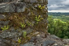 Εγκαταστάσεις που αυξάνονται στους τοίχους σε Restormel Castle στοκ εικόνα με δικαίωμα ελεύθερης χρήσης