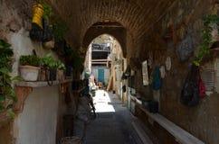 Εγκαταστάσεις που βρίσκονται πολλές στις τσάντες ηλικιωμένων γυναικών στοκ φωτογραφία με δικαίωμα ελεύθερης χρήσης