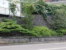 Εγκαταστάσεις σε έναν τοίχο Στοκ Εικόνες
