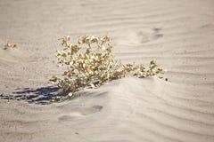 Εγκαταστάσεις στις άμμους ερήμων Στοκ Εικόνες