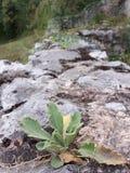 Εγκαταστάσεις στους βράχους Στοκ εικόνα με δικαίωμα ελεύθερης χρήσης