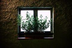 Εγκαταστάσεις στο πίσω-ανάψοντα παράθυρο έξω από την άποψη τη νύχτα στοκ εικόνες