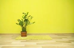Εγκαταστάσεις στο πράσινο δωμάτιο Στοκ εικόνα με δικαίωμα ελεύθερης χρήσης