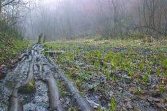 εγκαταστάσεις σφραγίδων στα δέντρα κοντά στην αγροτική πορεία Στοκ φωτογραφίες με δικαίωμα ελεύθερης χρήσης