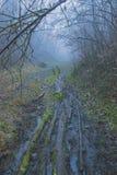 εγκαταστάσεις σφραγίδων στα δέντρα κοντά στην αγροτική πορεία Στοκ φωτογραφία με δικαίωμα ελεύθερης χρήσης