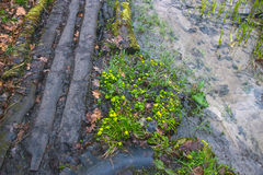 εγκαταστάσεις σφραγίδων στα δέντρα κοντά στην αγροτική πορεία Στοκ εικόνα με δικαίωμα ελεύθερης χρήσης