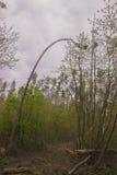 εγκαταστάσεις σφραγίδων στα δέντρα κοντά στην αγροτική πορεία Στοκ Εικόνα